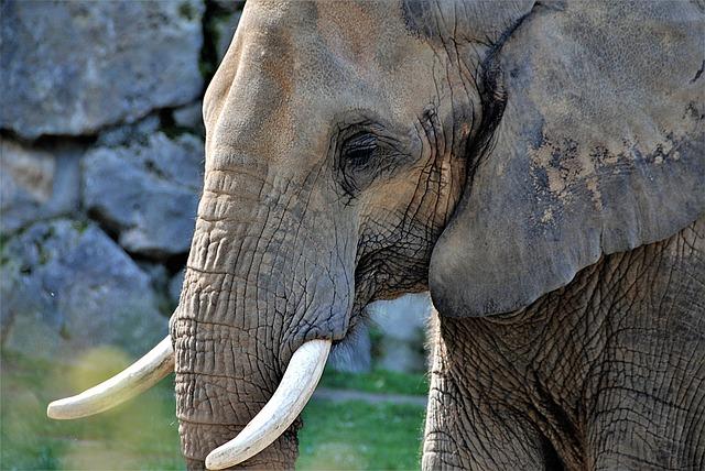 elephant-3292752_640