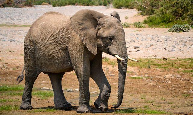 elephant-3100988_640-640x381