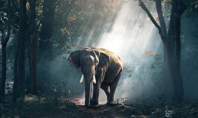 elephant_20180607