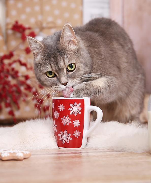 cat-3131956_960_720