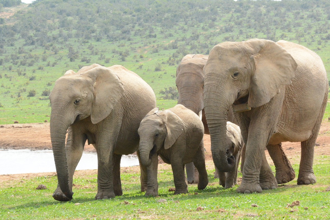 elephant20180928-1