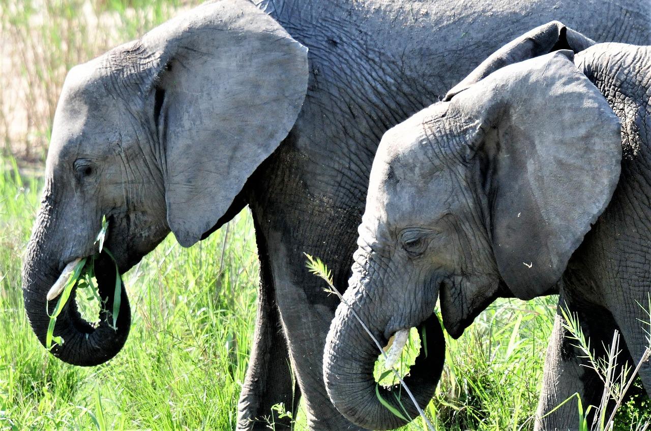 elephant-20181206-1