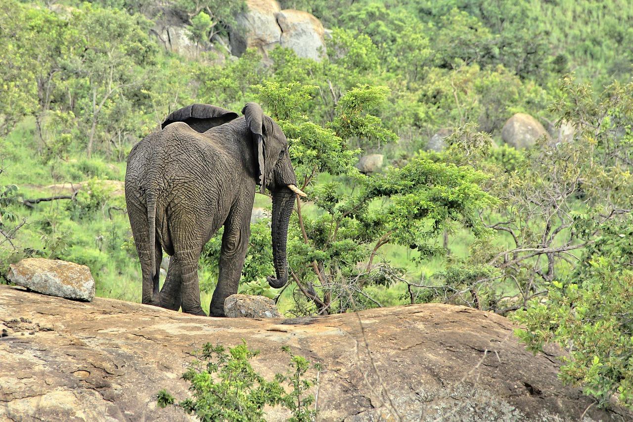elephant-20181206-2