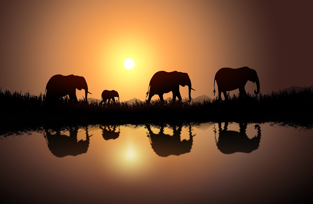 elephant-20190108-1