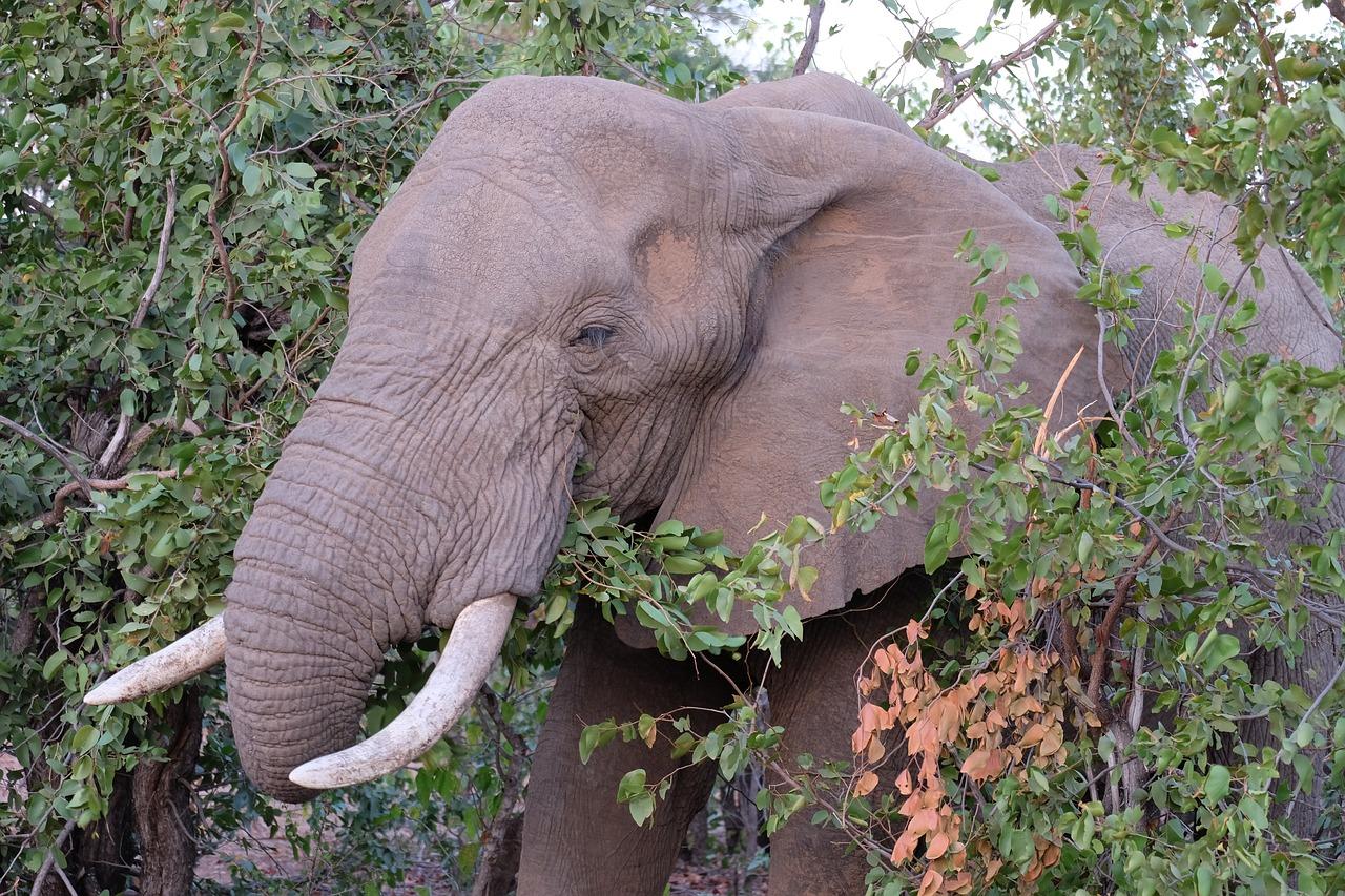 elephant-20190201-1