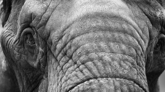elephant-20190201-2