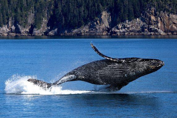 whale-20190531-1