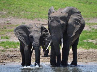 elephant-20190731-1
