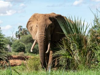 elephant-20190826-1
