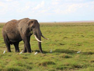 elephant-20190826-2