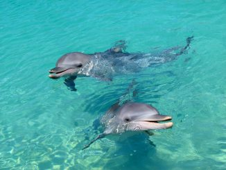 dolphin-20191119-1