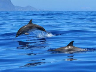dolphin-20191119-2